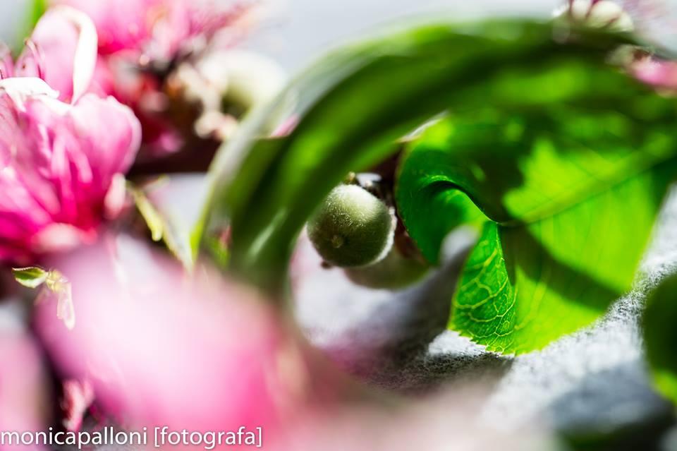 fiore_5